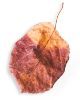 http://avala.bold-themes.com/autumn/wp-content/uploads/sites/2/2020/11/small_leaf_01.png