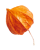 http://avala.bold-themes.com/autumn/wp-content/uploads/sites/2/2020/11/small_leaf_04.png